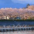 Photos: ならんだ~~桜と鷺