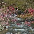 Photos: せせらぎ聞きながら咲く花たち