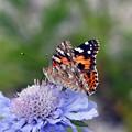 高原の花と蝶