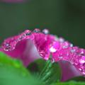 雨にも強い花