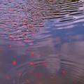 池のにぎわい
