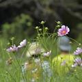 Photos: 花の中に