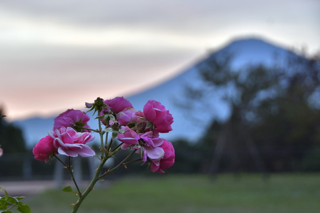 Photos: 初冠雪の日に