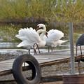 Photos: 湖畔でくつろぐ
