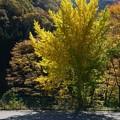 Photos: 黄色が一本
