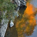 Photos: 渓谷へ影を落として