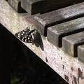 Photos: 蝶さんとその影