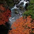 Photos: 朝の渓谷