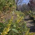 Photos: 師走の庭園