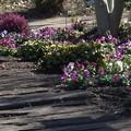 Photos: 春が来た!ように~~