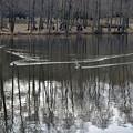 Photos: 翡翠のいる池