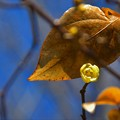 Photos: 大きな葉かげに・・