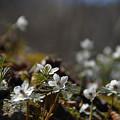 Photos: 春ですよ~~