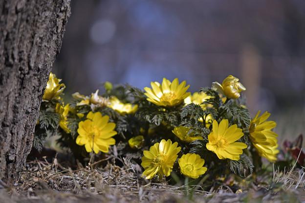 Photos: 春を呼ぶ