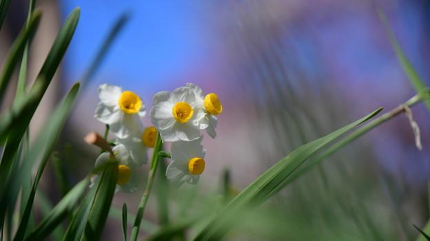 Photos: 春の喜び