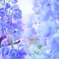 写真: flower3-371