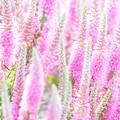 ピンクの森で