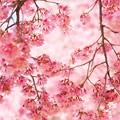 花降る季節