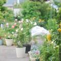 写真: 庭の様子