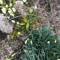 早く来た春