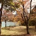 写真: セピアの木立