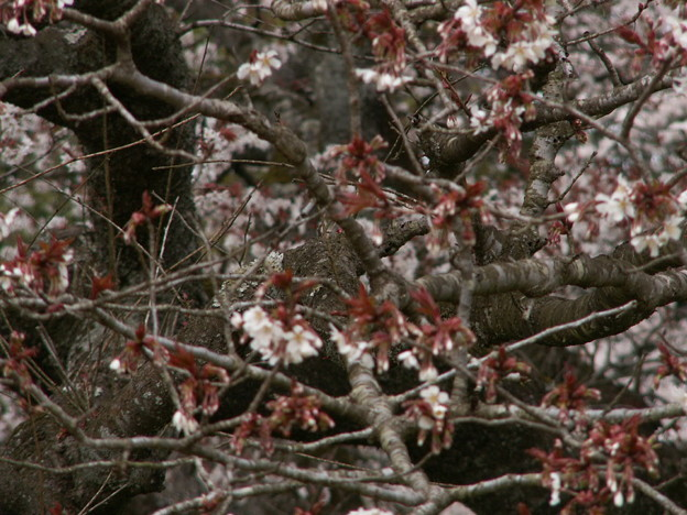 桜2010 003