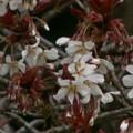 Photos: 桜2010 004