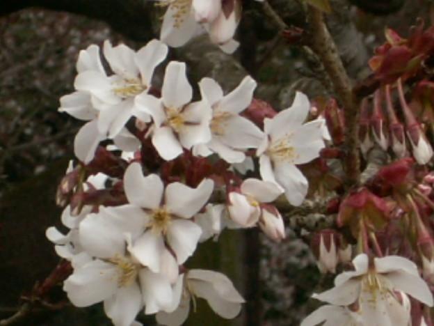 桜2010 010