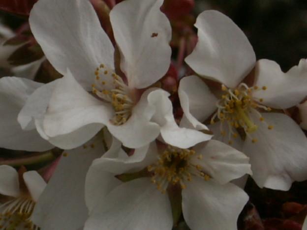 桜2010 014