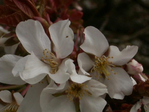 桜2010 015