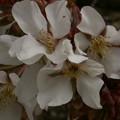 Photos: 桜2010 016