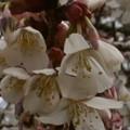 Photos: 桜2010 024