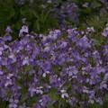Photos: 桜2010 042