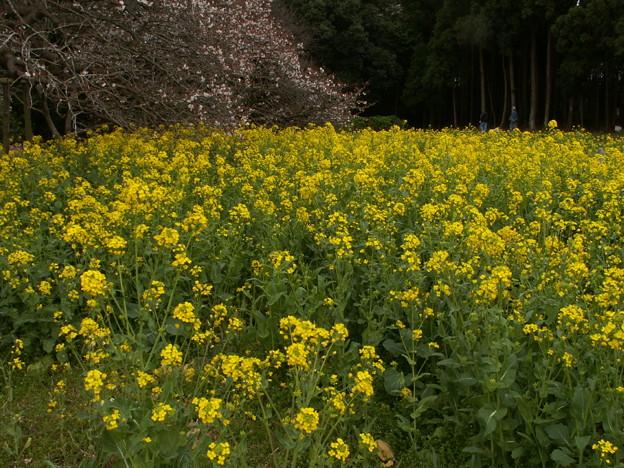 桜2010 047