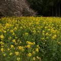 Photos: 桜2010 047