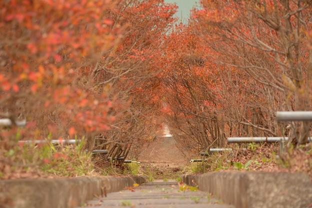 Photos: 赤いトンネル