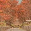 写真: 赤いトンネル