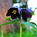 写真: 春告げてくれた花