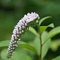 写真: 山に咲く花2