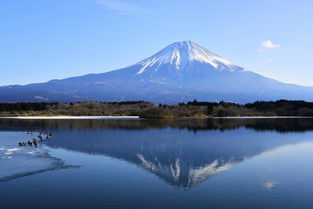 写真: 田貫湖與富士山