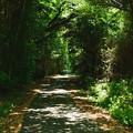 写真: 木漏れ日の道
