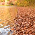 写真: 枯れ葉の波際