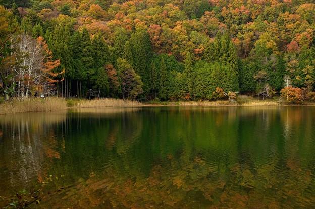 四尾連湖の紅葉