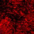 散りゆく紅色