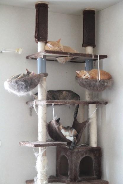 Photos: 別室のにゃんこタワー