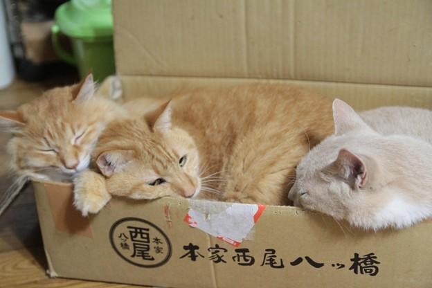 Photos: マッシュ あかり ナッツ2
