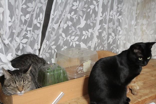 猫草。。。