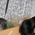 Photos: 猫草。。。