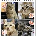 Photos: おねがい