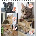 Photos: あけまして